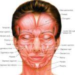 Massaggio Viso Antirughe Come Farlo in casa